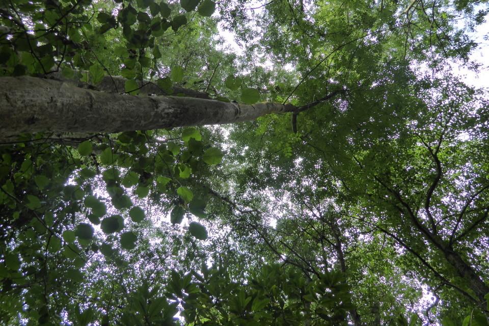 In The Woods - Hidden Herd